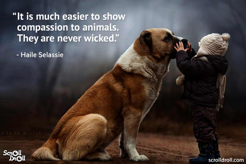 animal quote 17.jpg