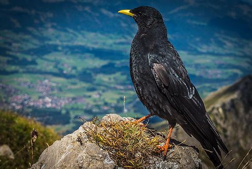 Austria-nature-animals.jpg