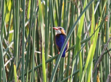 Isimangaliso Wetland Park : voor duikers en vogelaars
