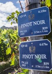 Newton-Johnson-pinot-noir-vineyard.jpg