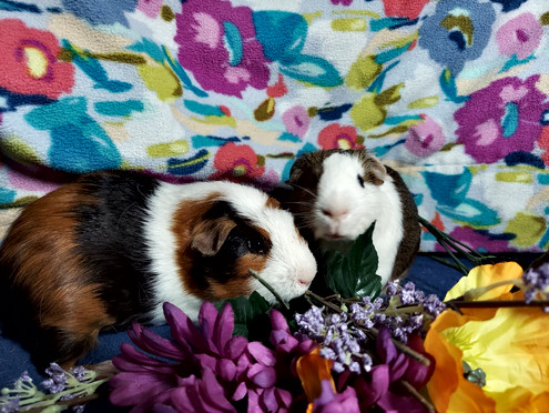 Ruth & Esther 8 mo-11 mo females