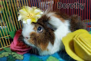 Dorothy (Golden Girl)