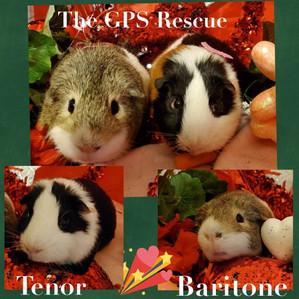 Tenor & Baritone