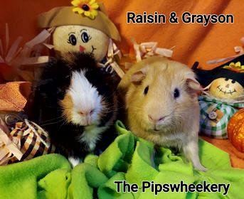 Raison & Grayson