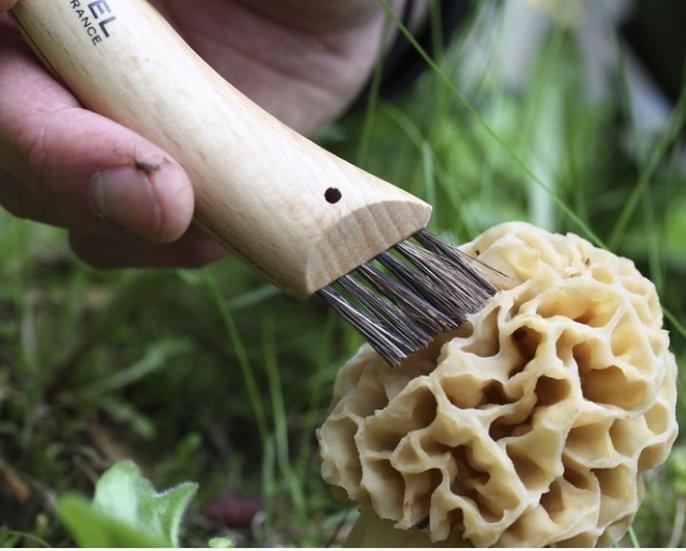 Couteau à champignons - Paddenstoelmes