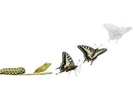 Professions du conseil et de l'accompagnement : réinventer nos métiers ou disparaître...
