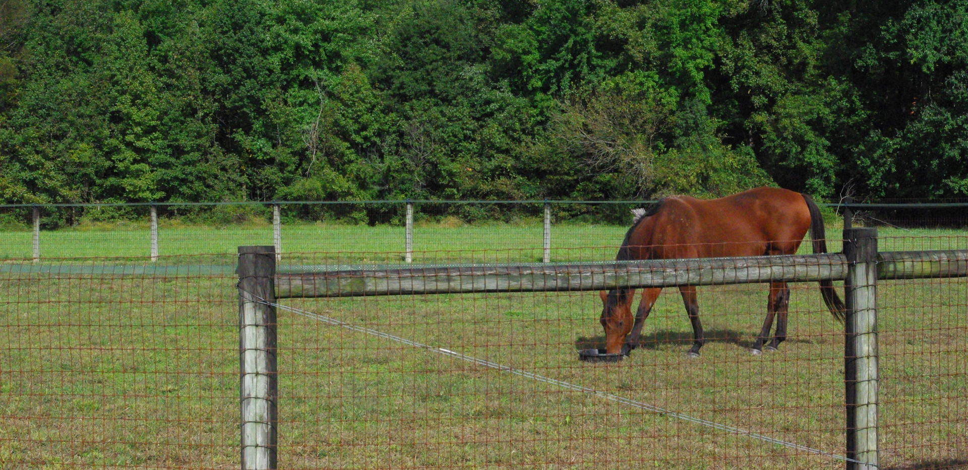 Smaller Paddocks Available