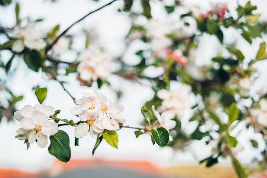 Ayurveda-Yogatherapie-Detox-Blüten.de