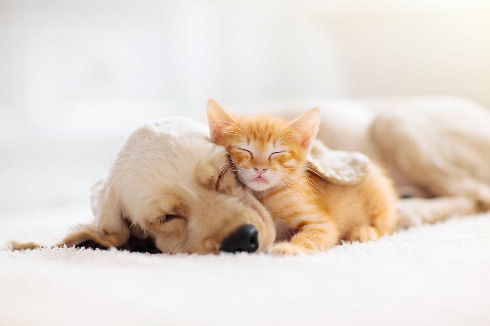 添い寝の仔犬と子猫