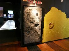 化石レプリカ製作