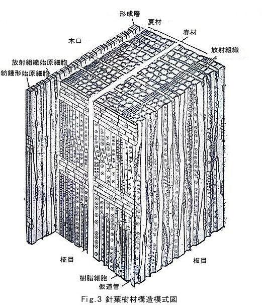 構造模式図