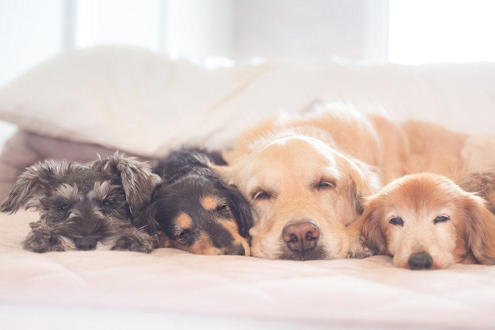 眠っている犬たち