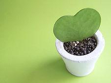 ハート型の植物