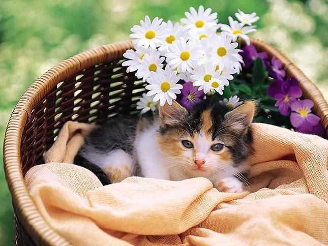 花に埋もれた猫
