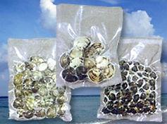 身入りの多い時期の貝