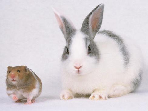 ウサギとハムスター