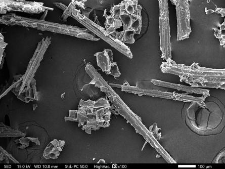 ミクロフィブリルの顕微鏡画像3