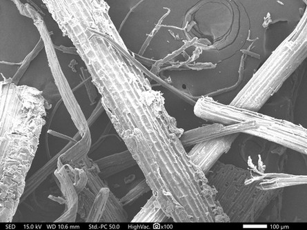 真竹の顕微鏡画像1
