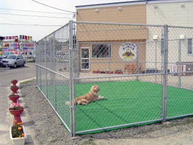 柵の中の犬