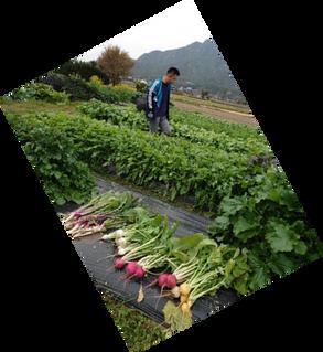 自然豊かなところで野菜の収穫中