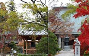 祇園寺の紅葉