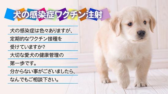 犬とワクチン注射の説明文