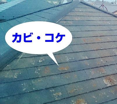 屋根カビ・コケ