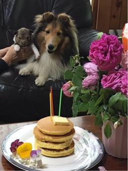 ペットの誕生日