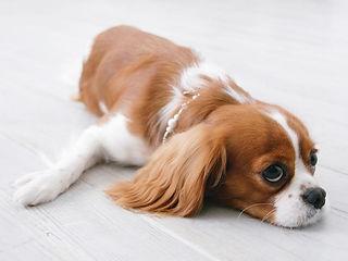 くつろぐ犬
