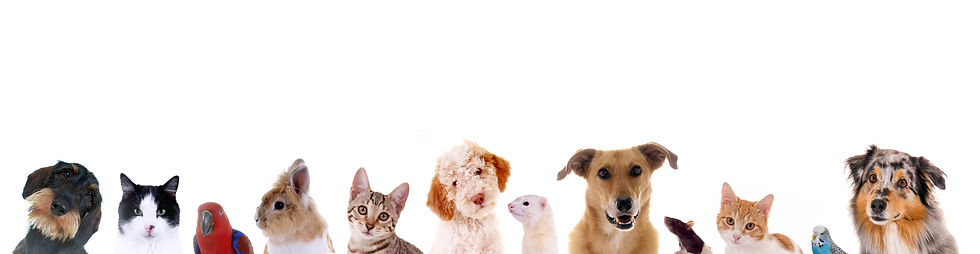 猫と犬たち