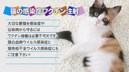 猫とワクチン注射の説明文