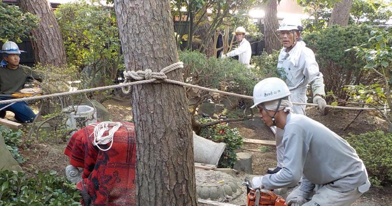 伐採作業をしている作業員