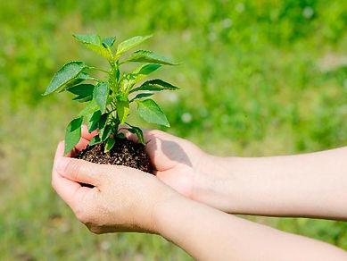 森林資源の有効活用
