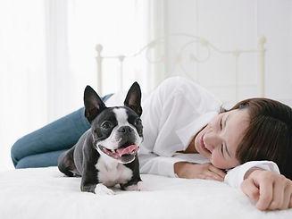 床暖房で寛ぐ犬と人間