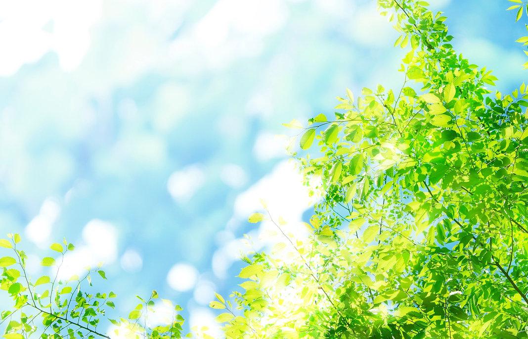 春のイメージ_若葉、新緑