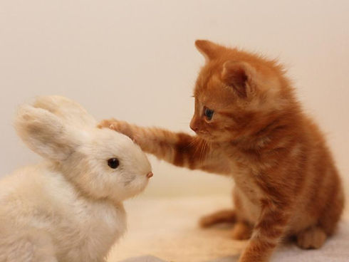 ウサギと猫