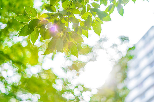 光と木の葉