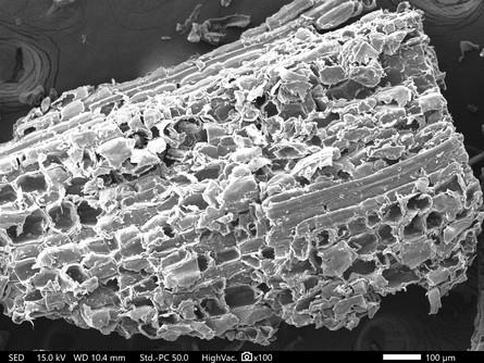 真竹の顕微鏡画像3