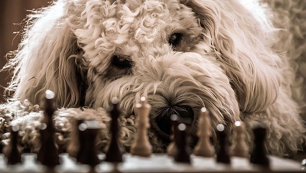Dog and chess board.jpg