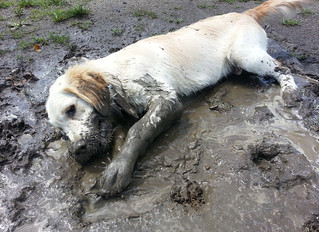 Fed up of muddy feet, wet dogs and general dirt skipping into the house ?