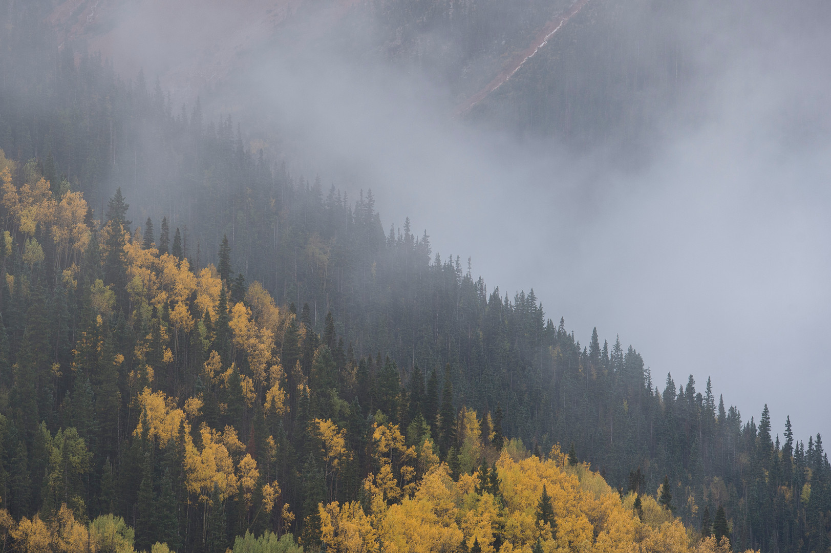 Low lying clouds drift above fall colors near Red Mountain Pass between the towns of Silverton and Ouray, Colorado on Saturday, September 22, 2017.