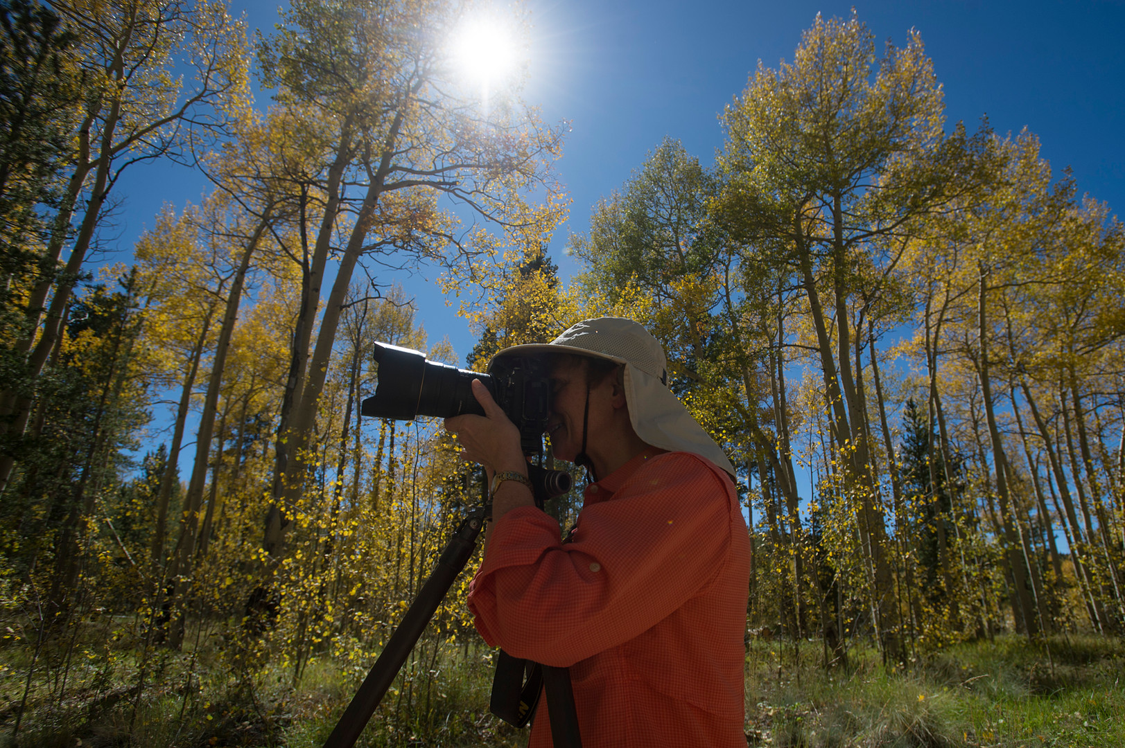 Marie Bush of Lafayette, Colorado snaps a photo under the cover of aspen trees showing their fall colors near Kenosha Pass on Thursday, September 21, 2017. The area, about two and a half hours from Fort Collins, is known to have one of the largest groves of aspen trees in the state.