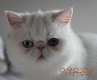 Orozul Alma of Catsoul (2).jpg