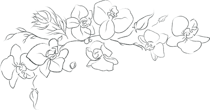 orchid-4.png
