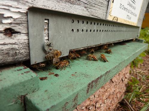 Parrainages de ruches - Formules 40.000 Abeilles