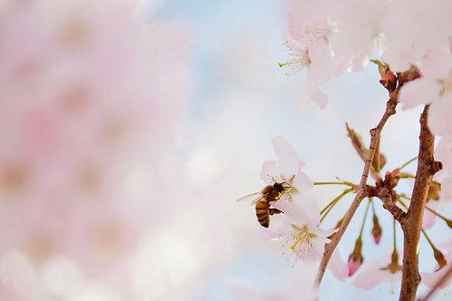 Parrainage de ruches - Formules 80.000 Abeilles