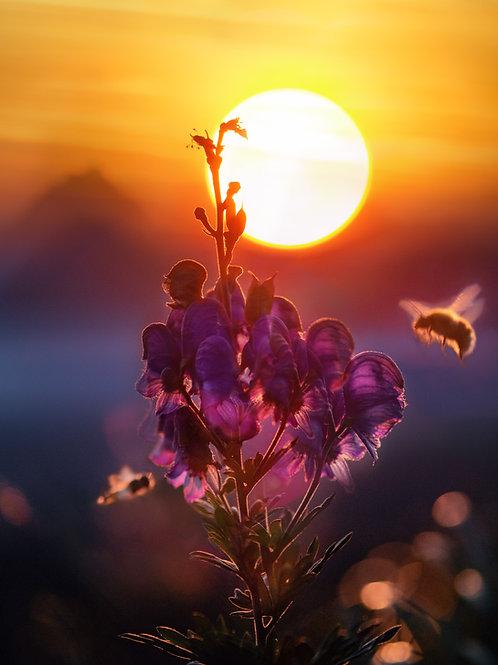 Parrainage de ruches - Formules 20.000 Abeilles