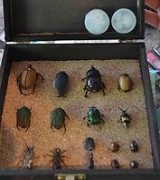 Colecciones entomologicas sustentables y legales