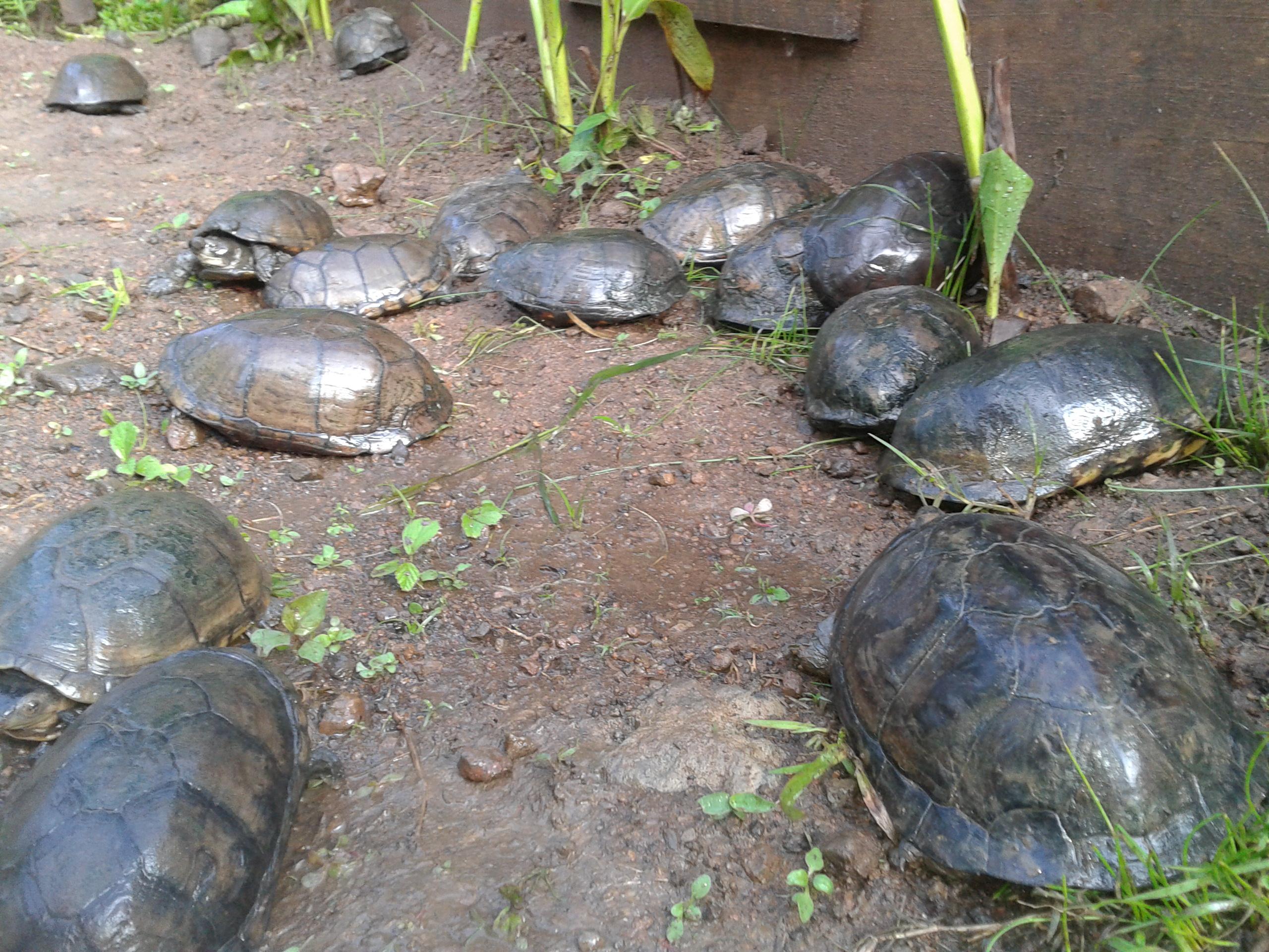 Población de tortugas
