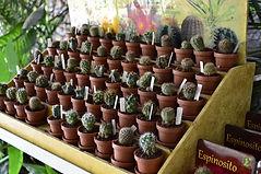 Venta de plantas legalmente producidas